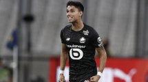 LOSC : la mise au point de Luiz Araujo sur son avenir