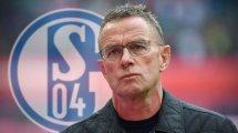 Schalke : Ralf Rangnick futur directeur sportif ?