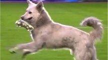 Vidéo :  quand un chien vole une chaussure et interrompt un match en Bolivie